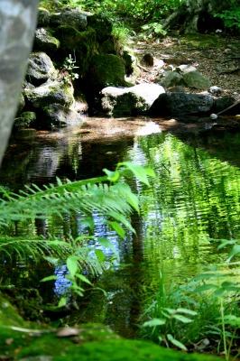 ブナの木と湧き水